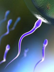 Как происходит зачатие, оплодотворение